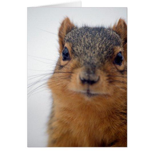 I, Squirrel Card
