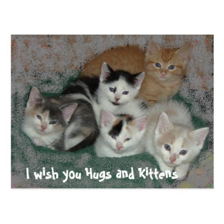 I wish you Hugs and Kittens Postcard