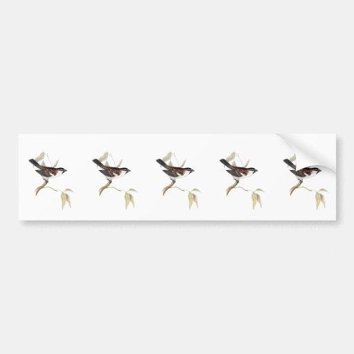 Iago Sparrow Bumper Stickers