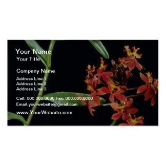 Ibaguense (Epidendrum) flowers Business Card