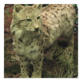 """Iberian Lynx Invitations 5.25"""" Square Invitation Card"""