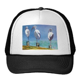 Ibis Design Hats