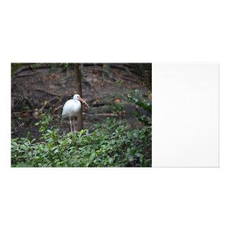 ibis standing on bush photo card template