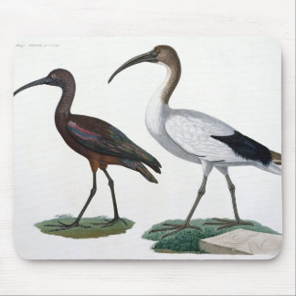 Ibises, from 'Description de l'Eypte', 1817 Mouse Mat
