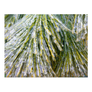 Ice-Coated Pine Needles Winter Nature Photography Postcard