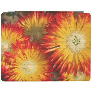 Ice Plants (Lampranthus Aureus) In Bloom iPad Cover