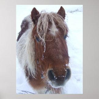 Ice Shetland Pony Huge Poster