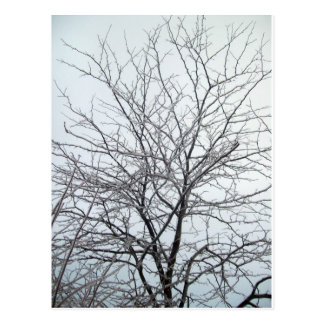 Ice Storm Postcard