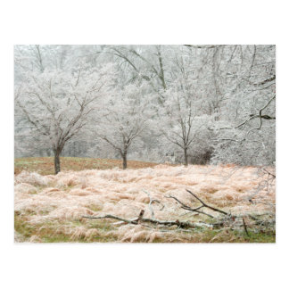 Ice Storm Rural Tennessee - Scenic Photograph Postcard