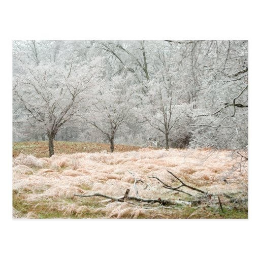 Ice Storm Rural Tennessee - Scenic Photograph Post Cards