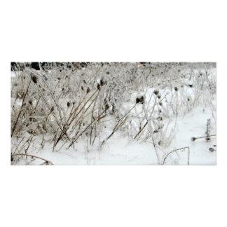 Ice Weeds Custom Photo Card