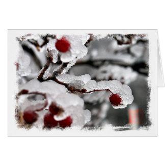 Iced Berries Card