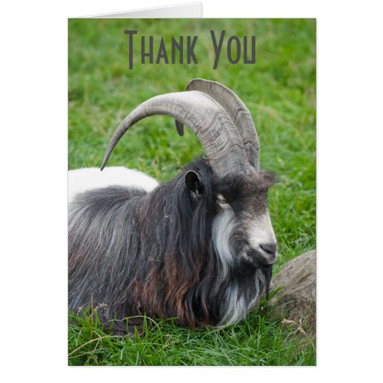 Iceland Goat thank you card