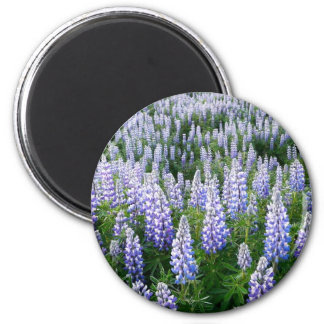 Iceland lupins magnet