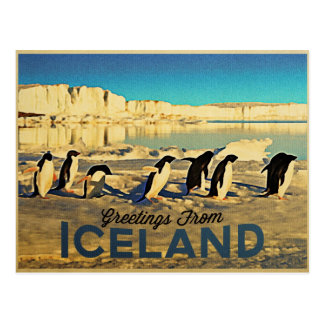 Iceland Penguins Postcard