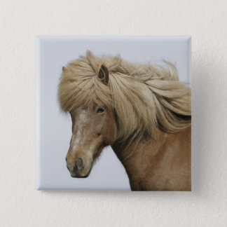 Iceland. Portrait of an Icelandic horse. 15 Cm Square Badge