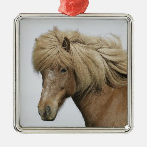 Iceland. Portrait of an Icelandic horse. Christmas Tree Ornament