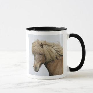 Iceland. Portrait of an Icelandic horse. Mug