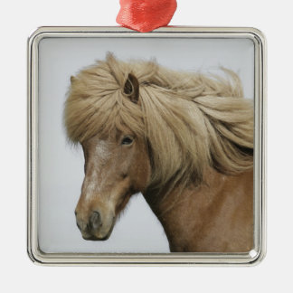 Iceland. Portrait of an Icelandic horse. Silver-Colored Square Decoration