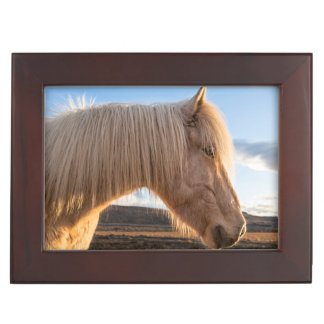 Iceland. Portrait Of Icelandic Horse Keepsake Box