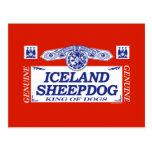 Iceland Sheepdog Postcard
