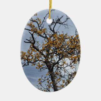 Icelandic Birch Ornament