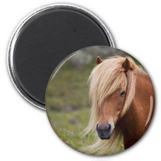 Icelandic Foal Refrigerator Magnets