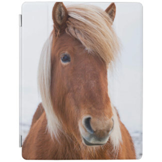 Icelandic Horse during winter  2 iPad Cover