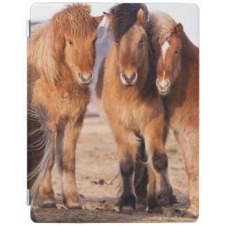 Icelandic Horse during winter iPad Cover