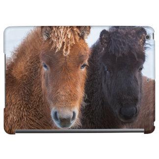 Icelandic Horse during winter on Iceland 2