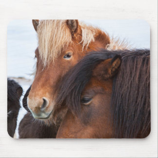 Icelandic Horse during winter on Iceland 3 Mouse Mat
