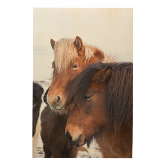 Icelandic Horse during winter on Iceland 3 Wood Print