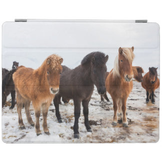 Icelandic Horse during winter on Iceland iPad Cover