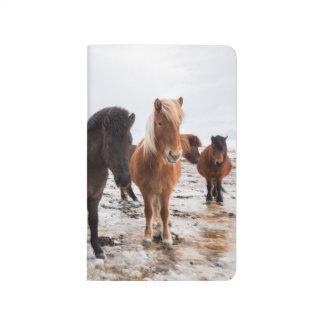 Icelandic Horse during winter on Iceland Journal