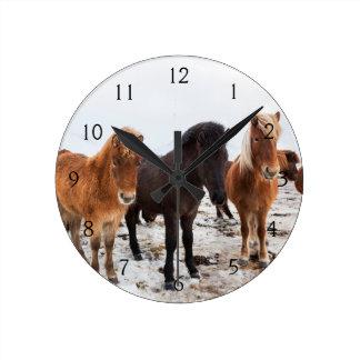 Icelandic Horse during winter on Iceland Round Clock