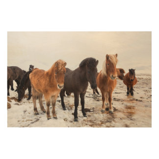 Icelandic Horse during winter on Iceland Wood Wall Art