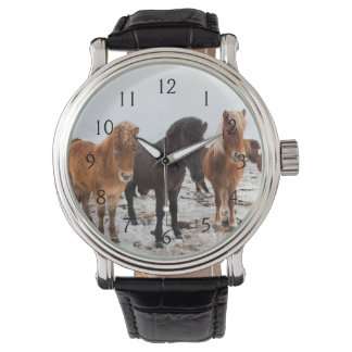 Icelandic Horse during winter on Iceland Wrist Watch