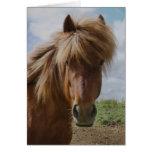 Icelandic Horse III Cards