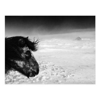 Icelandic horse in winter wilderness postcard