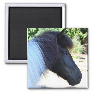 Icelandic Horse Magnet
