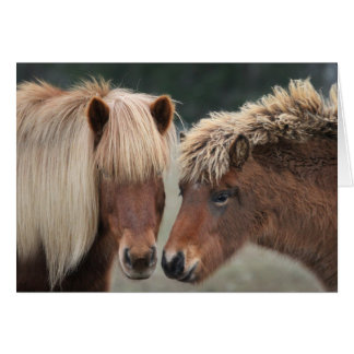 Icelandic Horse Note Cards
