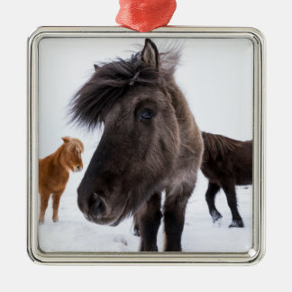 Icelandic Horse portrait, Iceland Silver-Colored Square Decoration