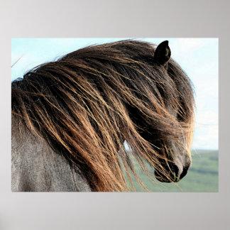 Icelandic Horse Portrait Poster Print
