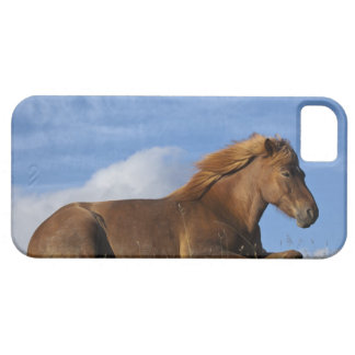 Icelandic horse resting and sky barely there iPhone 5 case