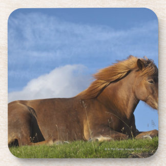 Icelandic horse resting and sky coaster