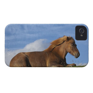 Icelandic horse resting and sky iPhone 4 case