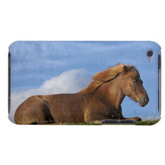 Icelandic horse resting and sky iPod touch covers