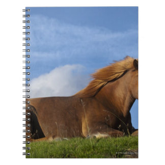 Icelandic horse resting and sky notebook