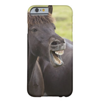 Icelandic horse with funny expression barely there iPhone 6 case