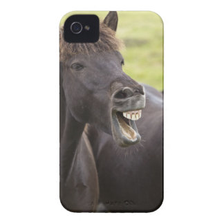 Icelandic horse with funny expression iPhone 4 Case-Mate cases